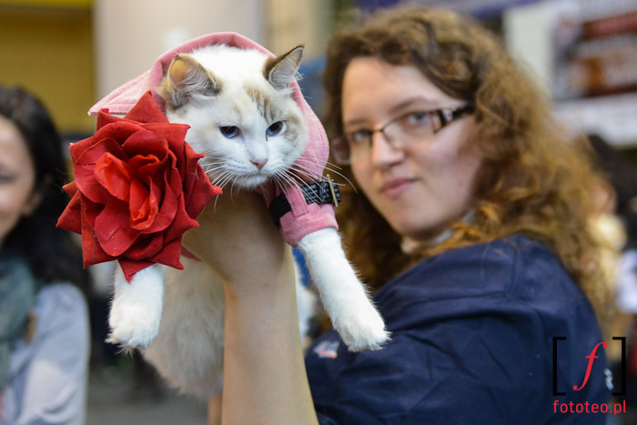 Cat show in Poland, Silesia