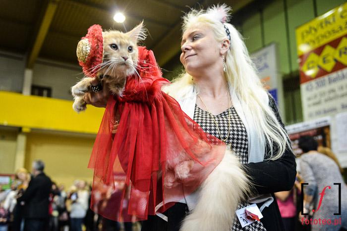 Fotografia eventowa- pokaz kociej mody