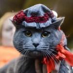 Koci pokaz mody