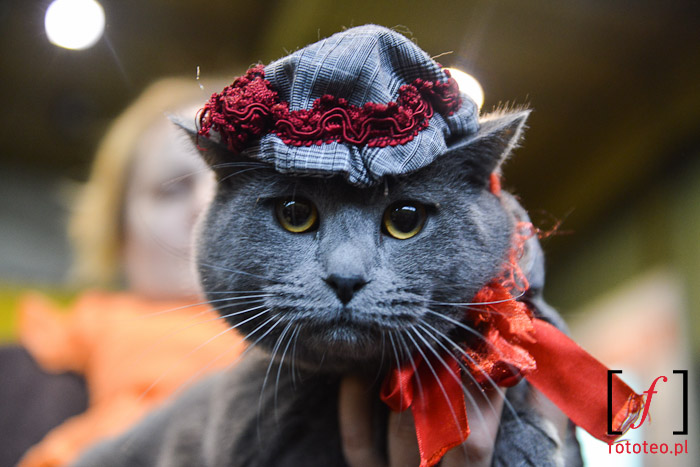 Cat show in Poland
