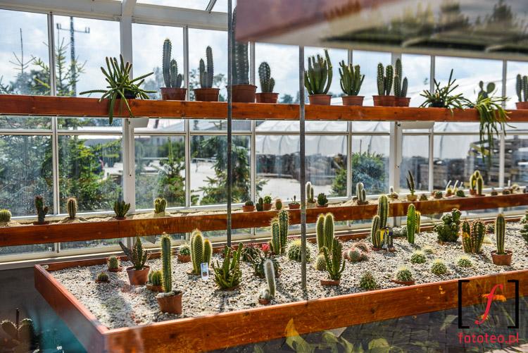 Szklarnia z kaktusami