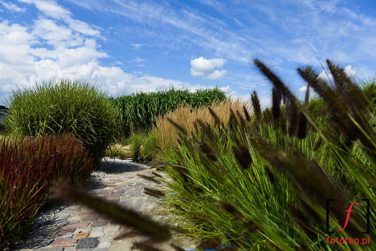 Fotografia krajobrazu i ogrodów