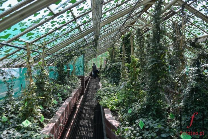 Ogród Botaniczny Uniwersytetu Wrocławskiego