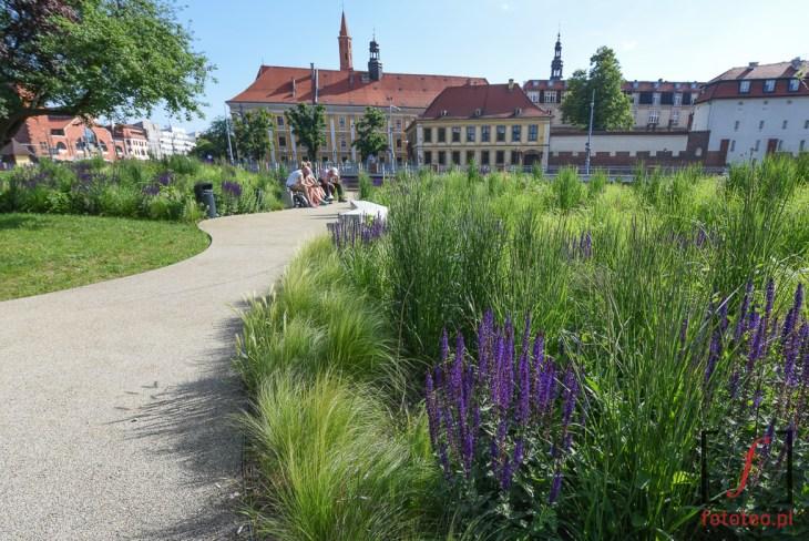 Wyspa Daliowa Wroclaw