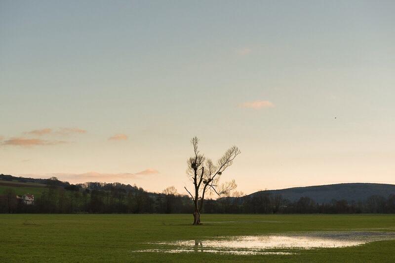 Eenzame boom, Olizy sur Chiers
