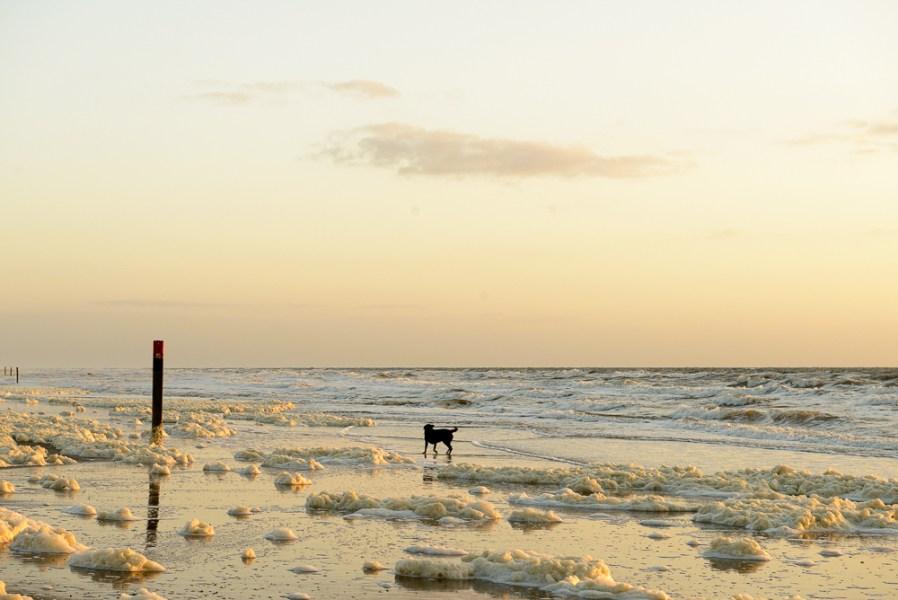 Strand Texel met hond bij zonsondergang