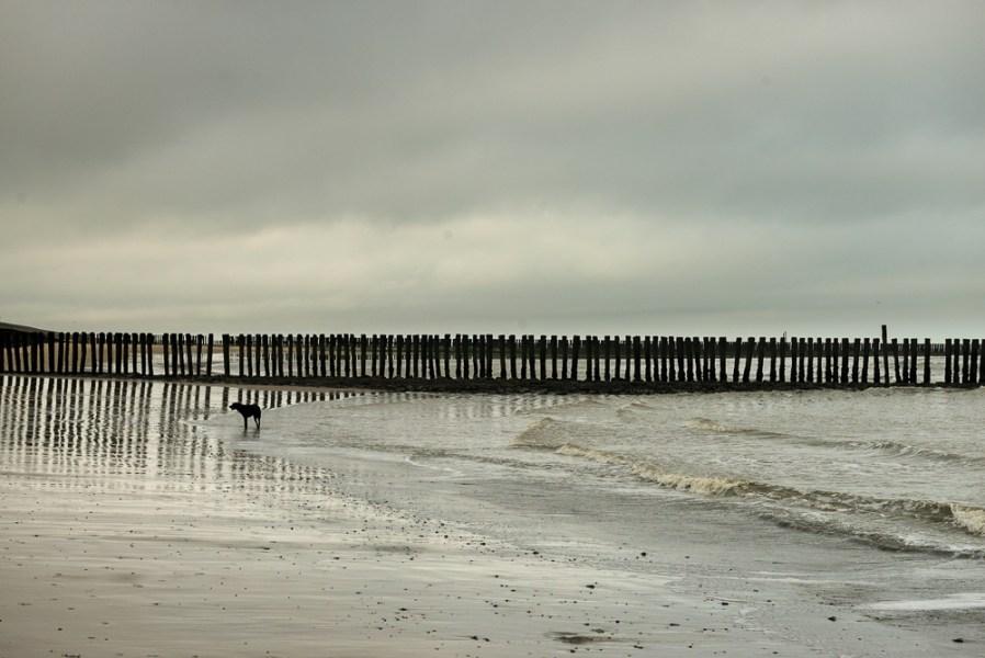 Strand, strandhoofden met hond