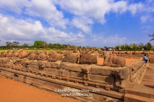 Mahabalipuram, India: Sculpted Stone Cattle and Tourists near Sh