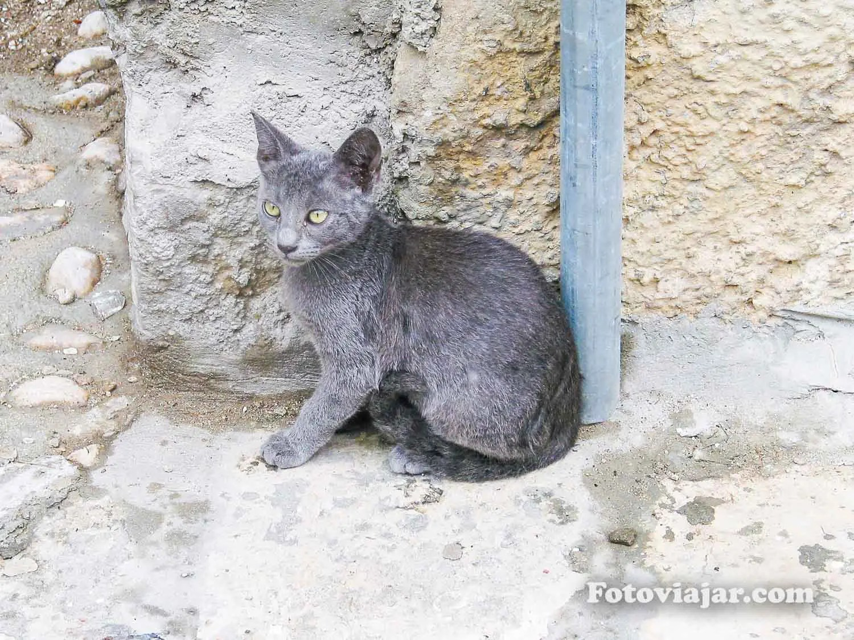 gato dubrovnik 2