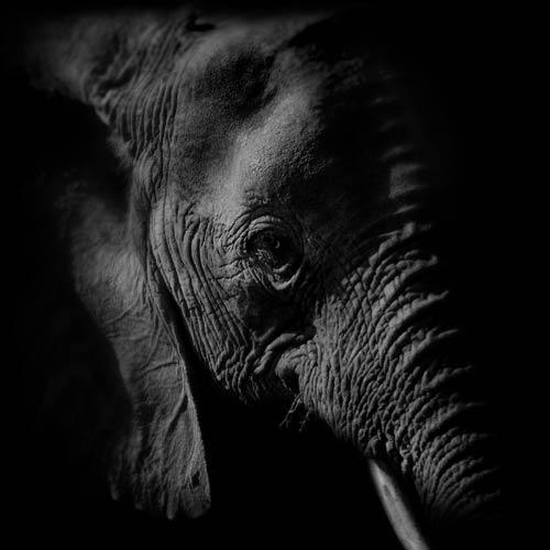 elephant wall print