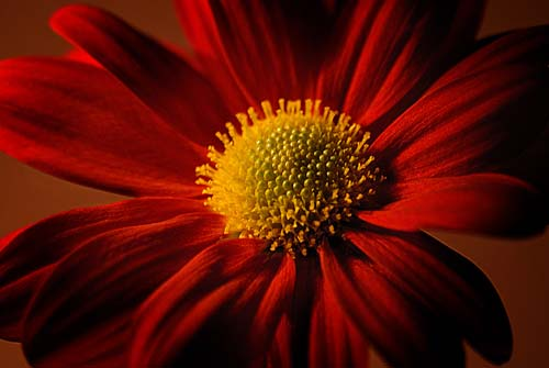red flower on canvas