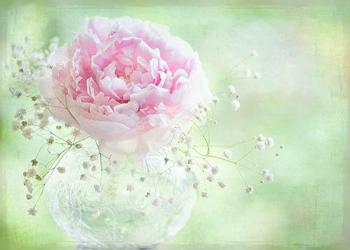 Jacky Parker flowers artwork prints