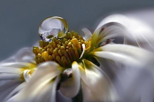 macro photo art