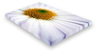 gallery wrap canvas print