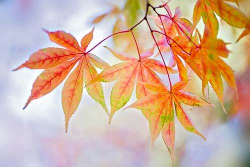 Autumn Palette canvas picture
