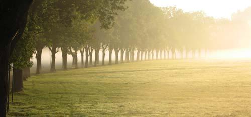 Misty Trees panoramic canvas print