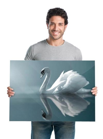 man holding acrylic wall print of swan