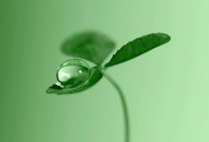 Clover Dew Drop