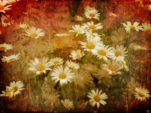 Dreaming of Daisies