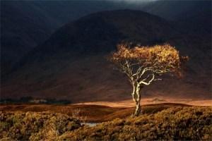 Rannoch Autumn Landscape