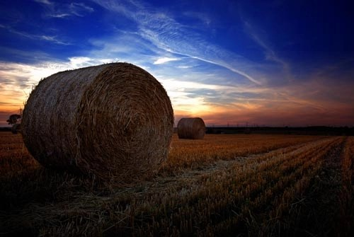 The Farmers Field