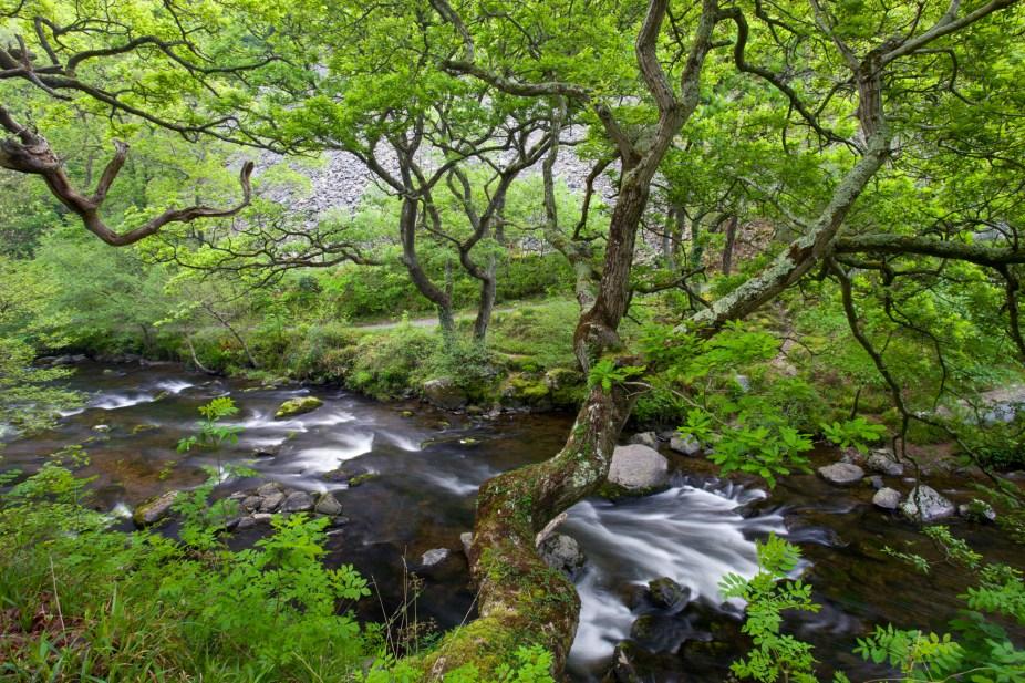 Spring brings a lush green canopy to Watersmeet in Exmoor National Park, Devon, England. © Adam Burton
