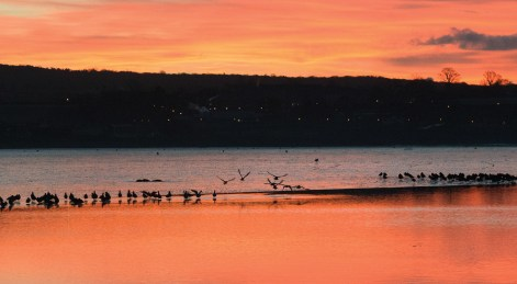 Godwits in silhouette at sunrise. Nikon D800E, 70-200mm at 135mm, ISO 5000, 1/320 sec at f/13. © Andrew Marshall