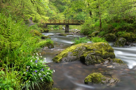 Wild garlic and bluebells flowering on the banks of the East Lyn River at Watersmeet, Exmoor National Park, Devon, England. Spring (May) 2015. © Adam Burton
