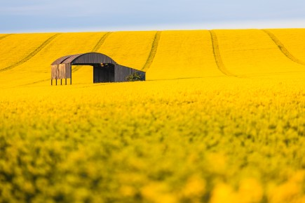 Rape field near Sixpenny Handley. A wide aperture throws the foreground out of focus to create an abstract look. Canon 5D mark II, 70-200mm at 200mm, ISO 100, 1/20 sec at f/4, polariser. © Mark Bauer