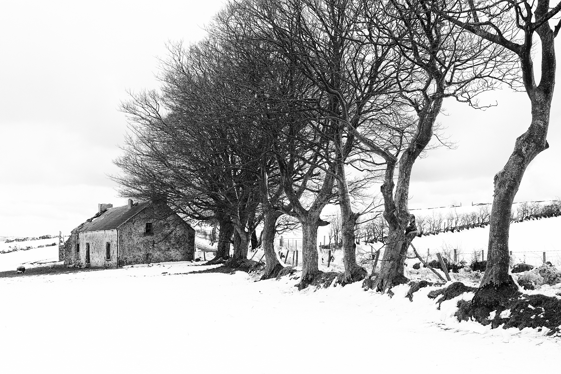 Old Cottage and Trees (since the image was made the derilict cottage has been replaced by a modern two-storey house), Co. Antrim, Northern Ireland. Canon EOS 5D III, Canon TS-E 24mm/3.5 II, ISO 400, 1/80s at f/14, Tripod. March. © Carsten Krieger.
