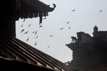 A monkey on the roof at Swayambunath Monkey Temple, Kathmandu. Canon 5D MkIII, 70-300mm at 95mm, ISO 200, 1/4000 sec at f/5.6. © Stuart Holmes.
