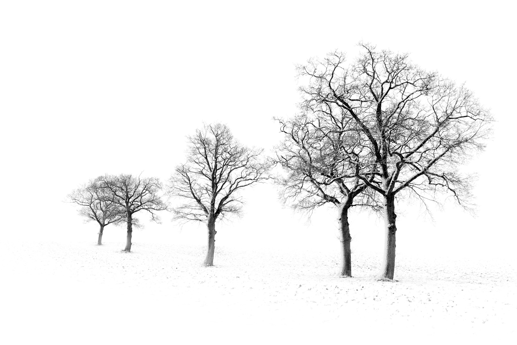 A row of trees stand out against the white Suffolk landscape. Canon 5D MkII, Canon 17-40mm f/4 at 40mm, ISO 100, 1/50s at f/8, Handheld. © Justin Minns