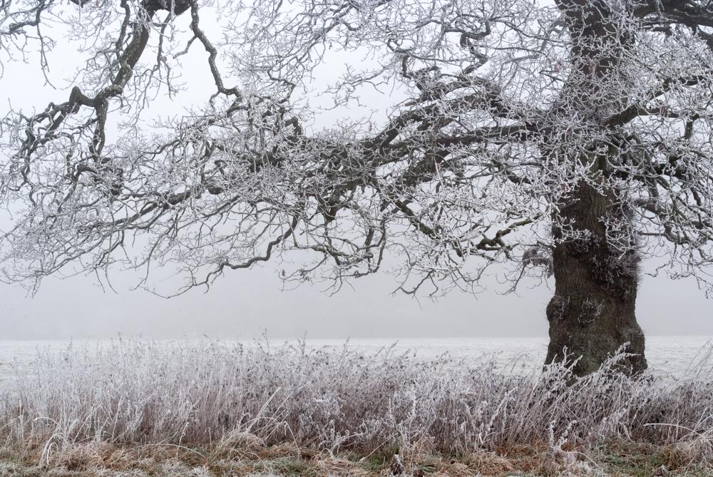 Suspended. Westonbirt Arboretum. Nikon D700, Nikkor 28-105 at 48mm, 1/30s at f/11. Tripod. January © Sarah Howard
