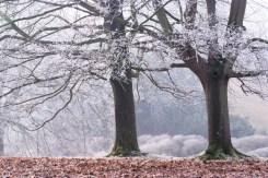 Texture, Westonbirt Arboretum. Nikon D700, Nkkor 28 - 105mm at 66mm. 1/30s at f/11. Tripod January. © Sarah Howard