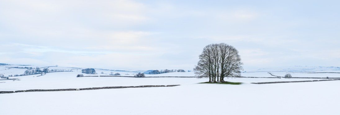 Eshton copse, Yorkshire Dales. Nikon D800e, Zeiss 35mm f2, ISO 100, 1/80s at f/9, tripod. Stitched pano. January. © Lizzie Shepherd