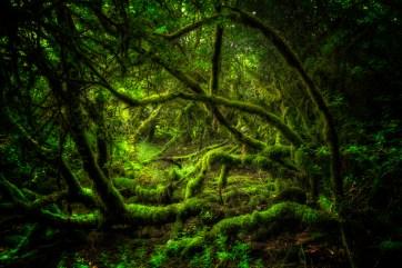 Forest, The Burren, County Clare, Ireland. Canon EOS 5D III, Canon 24mm TS-E, f14, 0.4 sec., ISO 800, Tripod © Carsten Krieger
