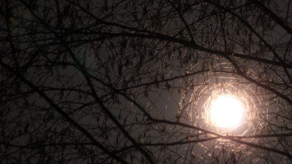 Photo of moon through the trees