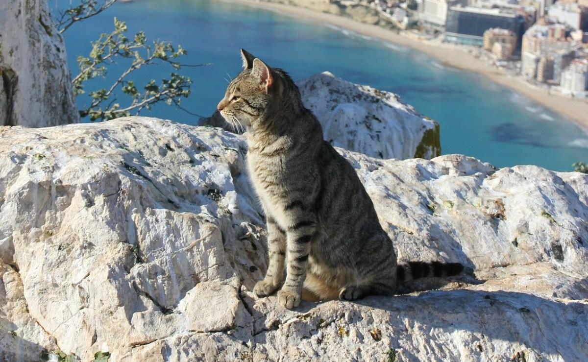Photo of cat looking out to sea / Nacho Ruiz CC0 Pixabay