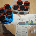 Growing trees from seeds with the Woodland Trust