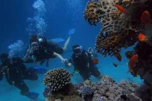 Anguilla snorkeling adventure