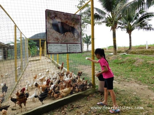 kluang_UK_farm_animal_feeding.jpg