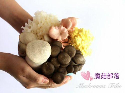 mushroom_tribe_fb_photo_2.jpg