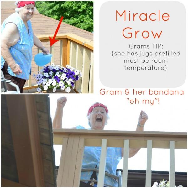 flowers, gram planting, miracle grow tip