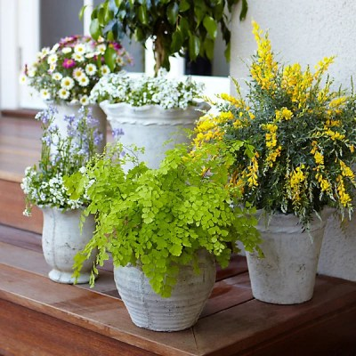 How to entertain with mosquito repelling plants