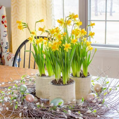 Daffodils centerpiece in our dining room