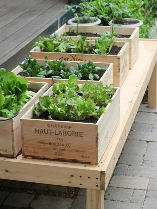 repurposed-wine-crate-garden with herbs