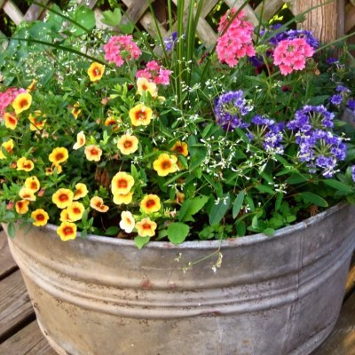 10 Favorite Tips for Annual Flowers