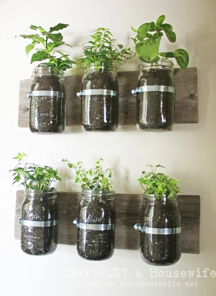 Mason Jars hanging on wall with basil, mint and parsley