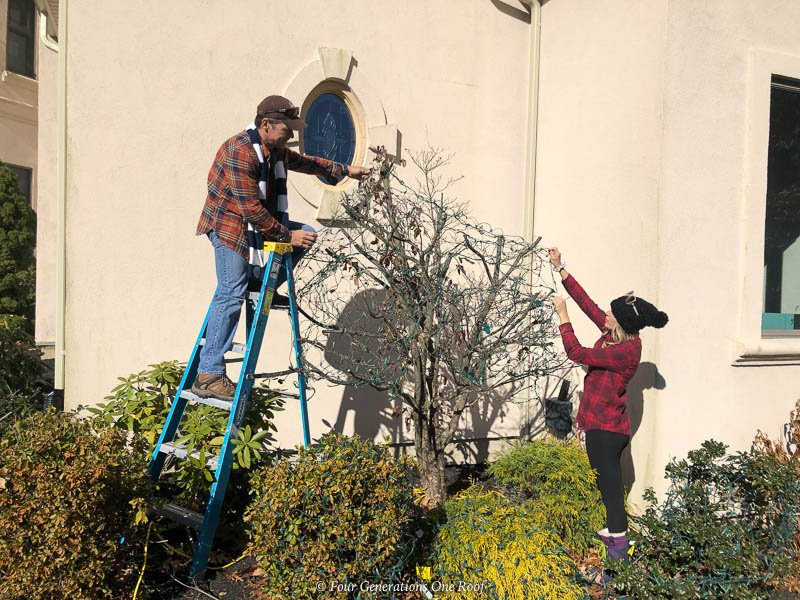 Jessica Bruno hanging Christmas Outdoor Christmas lights on shrubs