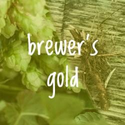 Brewer's Gold Hop 2018 Rhizome